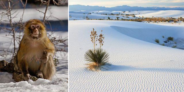 Det snöar som aldrig förr i öknen. Wikicommons