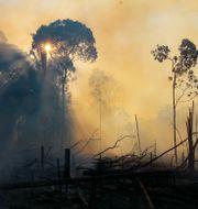 Brand i Labrea, i Amazonas i augusti iår. Edmar Barros / TT NYHETSBYRÅN