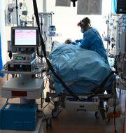 Royal Papworth Hospital i Cambridge. Neil Hall / TT NYHETSBYRÅN