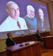 Harvey J Alter, Michael Houghton och Charles M Rice. Claudio Bresciani/TT / TT NYHETSBYRÅN