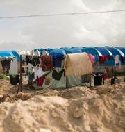 Al-Hol-lägret i Syrien. Maya Alleruzzo / TT NYHETSBYRÅN
