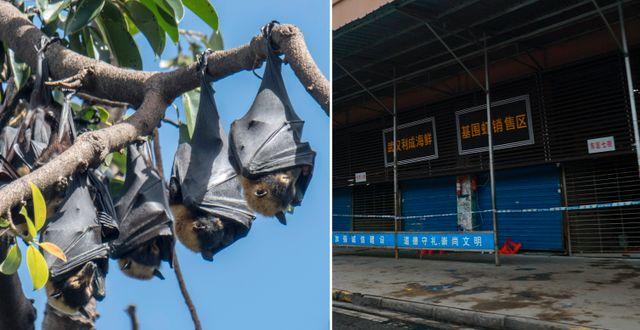 Fladdermöss/Marknaden i Wuhan där utbrottet tros ha startat. TT