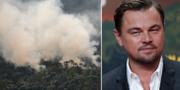 En brand i Amazonas i Brasilien och Leonardo DiCaprio.  TT/AP