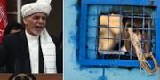 Ashraf Ghani/Fängelse i Afghanistan.  TT