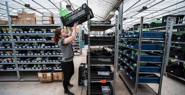 Kundernas ordrar paketeras och görs klara för levereras från Odla.nu:s anläggning utanför Kristianstad. Johan Nilsson/TT / TT NYHETSBYRÅN