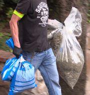 Spansk polis bär ut cannabis från en bostad. Spanska polisen