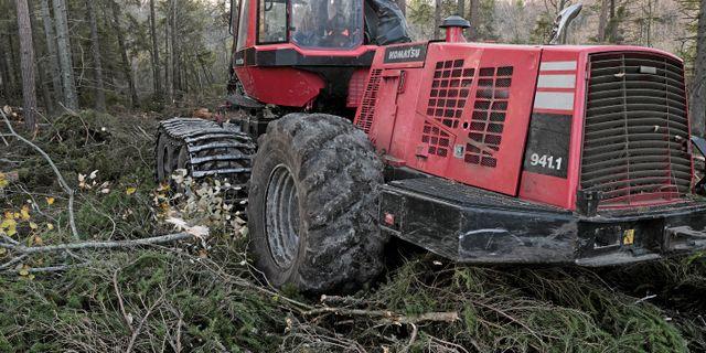 Arkivbild på skogsavverkning.  Henrik Holmberg / TT / TT NYHETSBYRÅN
