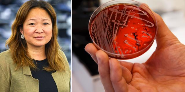 Jessica Polfjärd (M) och bild på antibiotikaresistenta bakterier. TT