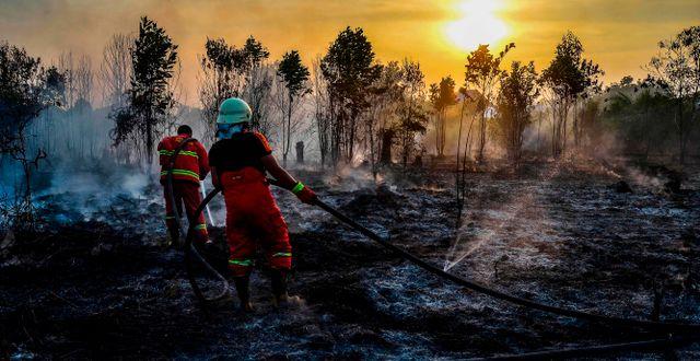Räddningsarbetare släcker bränder i Kampar. WAHYUDI / AFP