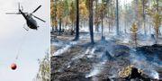Skogsbränderna i somras. TT