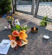 Blommor utanför simbassängen. Johan Nilsson/TT / TT NYHETSBYRÅN