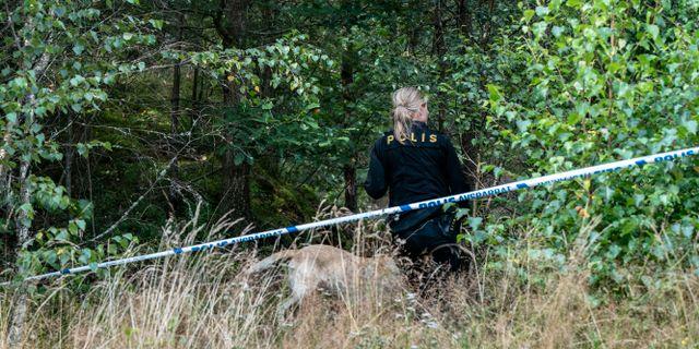 Polisen söker efter försvunnen med hjälp av hund. Arkivbild. Johan Nilsson/TT / TT NYHETSBYRÅN