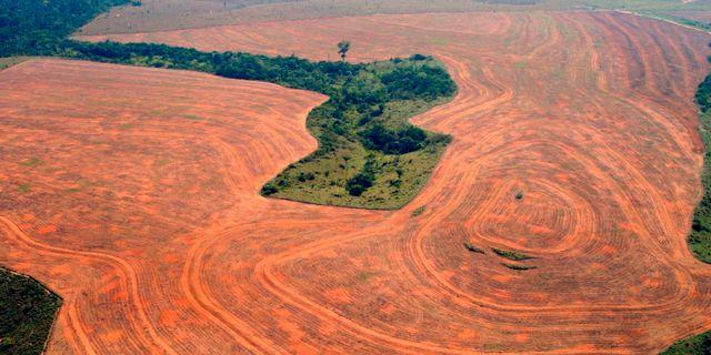 Avverkningen av Amazonas. ALBERTO CESAR-GREENPEACE / TT NYHETSBYRÅN/ NTB Scanpix