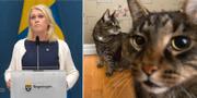 Socialminister Lena Hallengren (S)/Katter.  TT