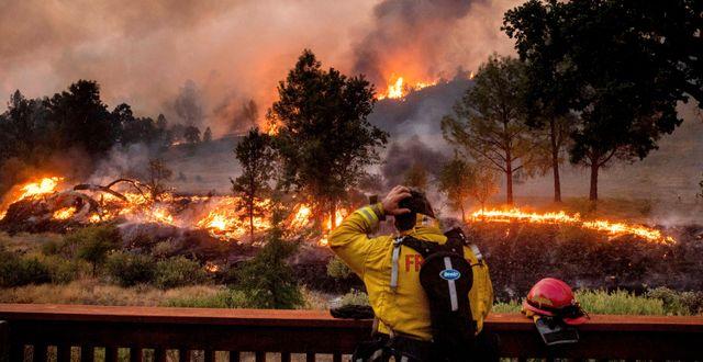 Arkivbild: En brandman ser ut över elden i Napa Valley, Kalifornien. Noah Berger / TT NYHETSBYRÅN