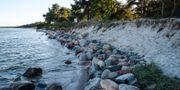 Stranderosion runt Skånes kust blir ett allt större problem. Johan Nilsson/TT / TT NYHETSBYRÅN