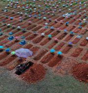 Nygrävda gravar i Peru. Rodrigo Abd / TT NYHETSBYRÅN