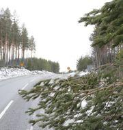 Nedfallna träd utanför Stockholm.  Christine Olsson/TT / TT NYHETSBYRÅN