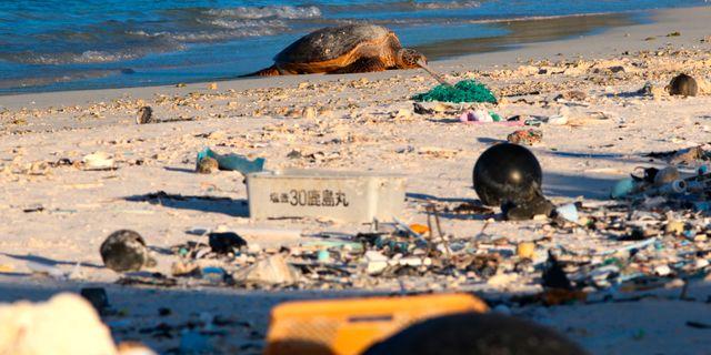 En död sköldpadda bland plastavfall. Caleb Jones / TT NYHETSBYRÅN