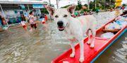 En översvämmad gata i provinsen Ubon Ratchathan. KRIT PHROMSAKLA NA SAKOLNAKORN / THAI NEWS PIX