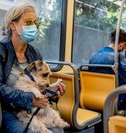 Illustrationsbild: Kvinna med hund på spårvagn i Milano. ADAM IHSE / TT / TT NYHETSBYRÅN