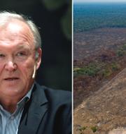 Swedbanks ordförande Göran Persson och Amazonas. TT