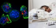 T-mördarceller tillsammans med en cancercell/illustrationsbild, influensa. TT