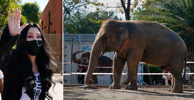 Cher, Kavaan. TT