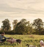 Under våren 2020 har Scan och Halla Gård lanserat produkter av fläskkött med lägre klimatpåverkan*. Scan