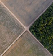 Amazonas regnskog har på många platser ersatts av jordbruksmark. Leo Correa / TT NYHETSBYRÅN