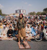 En medlem i talibanerna i förgrunden och afghanska män i bakgrunden i samband med fredagsbönen i Kabul igår. Bernat Armangue / TT NYHETSBYRÅN