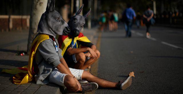 Två män utkläda till åsnor demonstrerar för självständighet i Katalonien. Manu Fernandez / TT / NTB Scanpix