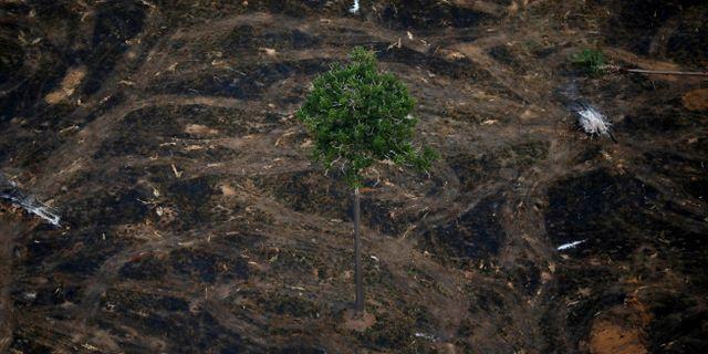 Ett avskogat område av Amazonas i närheten av Porto Velho i Brasilien. Bruno Kelly / TT NYHETSBYRÅN