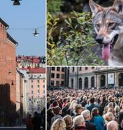 Konst på Kungsholmen och knytblusprotesterna på Stortorget var några av årets mest omskrivna händelser i huvudstaden. TT
