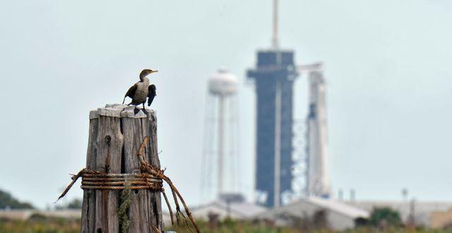 Arkivbild: I bakgrunden en SpaceX Falcon 9-farkost med Crew Dragon-kapsel.  Chris O'Meara / TT NYHETSBYRÅN