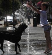 Flicka och hund leker i fontän i Bryssel i Belgien. YVES HERMAN / TT NYHETSBYRÅN