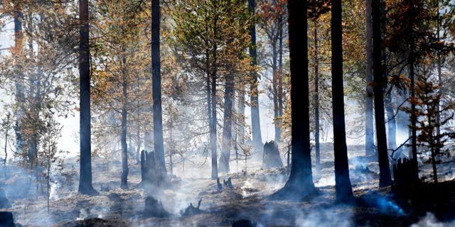 Brandhärjad skog vid Trängslet i somras.  Maja Suslin/TT / TT NYHETSBYRÅN