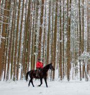 Arkivbild: En kvinna rider i skogen i delstaten Salzburg i Österrike. Kerstin Joensson / TT NYHETSBYRÅN