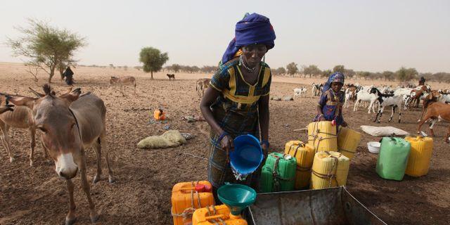 Arkivbild: En kvinna tillhörande den nomadiska folkgruppen Fulani samlar vatten till sin familjs boskap vid en brunn i Gadabeji, i Nigerias grannland Niger. SUNDAY ALAMBA / TT / NTB Scanpix