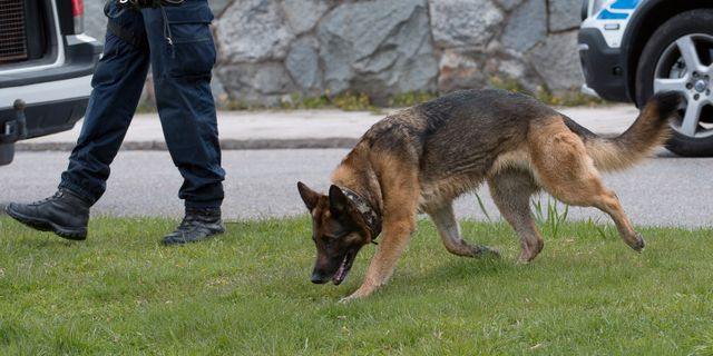 Arkivbild Maja Suslin/TT / TT NYHETSBYRÅN