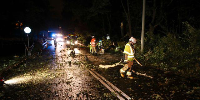 Röjningsarbete av ett träd som fallit över en personbil i Göteborg Adam Ihse/TT / TT NYHETSBYRÅN