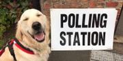 En av de tusentals hundar under hashtagen #dogsatpollingstations. Twitter