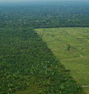 Avverkning i Amazonas. CARL DE SOUZA / AFP