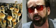 """Magic mushrooms""/Nicolas Cage.  TT."