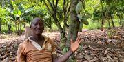 Kouakou Kinimo, kakaoodlare i Elfenbenskusten.  ANGE ABOA / TT NYHETSBYRÅN