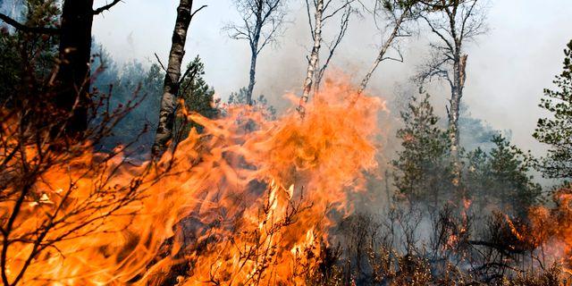 Arkivbild, inte från den aktuella skogsbranden. BJÖRN LARSSON ROSVALL / TT / TT NYHETSBYRÅN
