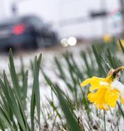 Snöbyar i nordvästra Sverige på onsdagen.   TT