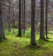 Skogsstyrelsen lägger ned sin utredning.  Mostphotos