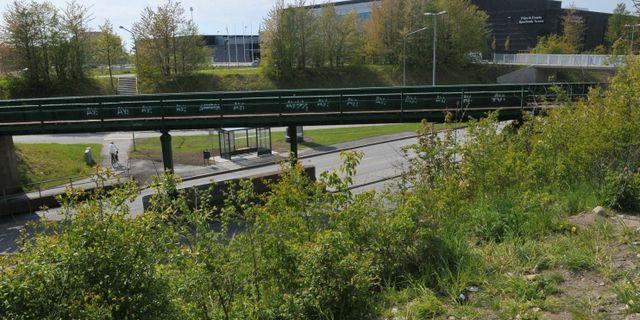Arkivbild. Stadsparken i Lund.  Johan Nilsson / TT / TT NYHETSBYRÅN