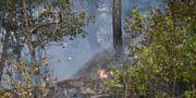 Skogsbranden i Nacka den 15 juni Henrik Montgomery/TT / TT NYHETSBYRÅN